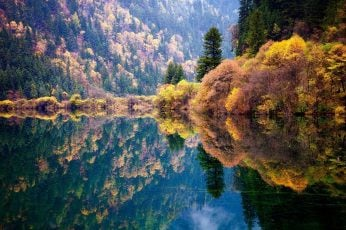 Green trees and body of water, body of water near forest, nature