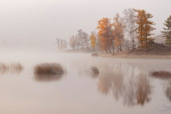 Body of water beside trees, nature, landscape, lake, mist, morning