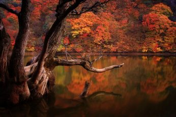 Brown body of water wallpaper, lake, fall, forest, dead trees, reflection