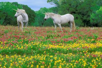 Two white unicorns wallpaper, horses, grass, field, flowers, plant