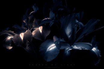 Blue petal flowers wallpaper, neon, black, digital art, no people, close-up