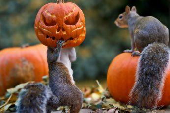 Halloween, squirrels, pumpkin, mask, funny, cute, celebration