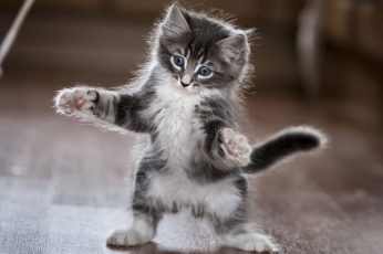 Cat wallpaper, kitten, cute, playing, funny