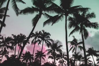 Glitch art wallpaper, nature, vaporwave, palm trees, pink, silhouette