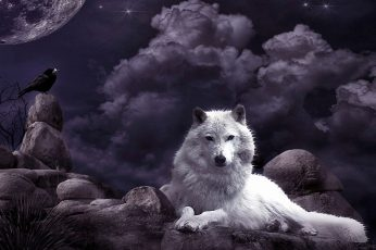 Wolf wallpaper, night sky, crow, moon, fantasy art, white wolf, mystic