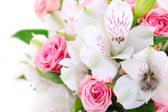 Bouquet wallpaper, pink, rose, flower, floral, flowers, blossom, petal