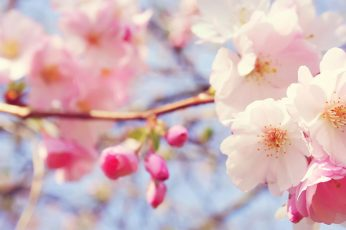 April flower wallpaper, pink, petal, spring, blossom, plant, floral