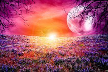 Pink moon peace wallpaper