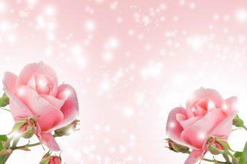 Flower wallpaper, nature, romance, summer, bright, love, desktop