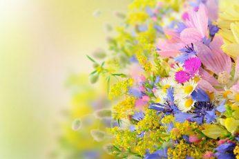 Flower wallpaper, plant, spring, flowers, blossom, floral, garden, leaf