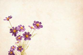 Flower wallpaper, background with copyspace, floral, border, garden frame