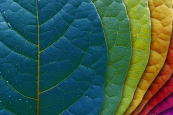 Multicolored leaf wallpaper, green leaf, leaves, macro, colorful, plants