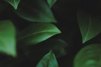 Green leaves wallpaper, selective focus photography of green leaf, macro