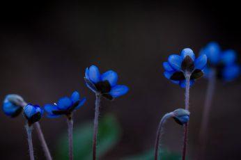 Blue and white flower decor wallpaper, plants, blue flowers, nature, macro