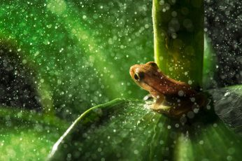 Brown frog wallpaper, closeup photography of brown frog on green leaf plant