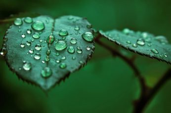 Green leafed plant wallpaper, shallow focus photo of liquids on leaf, macro