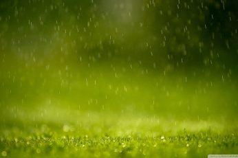 Waters dropping on green grass field wallpaper
