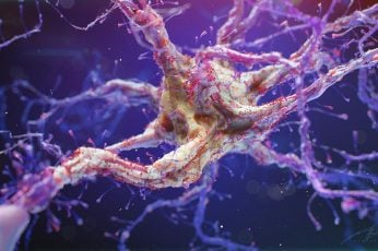 Neuron wallpaper, synapse, science, macro, organic, microworld, human