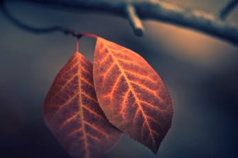 Brown leaf wallpaper, fall, nature, macro, depth of field, leaves, photography