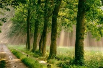 Green leafed trees wallpaper, forest, road, grass, mist, path, rain, sunlight