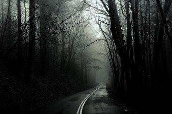 Black dark forest wallpaper, monochrome, roads, trees, white