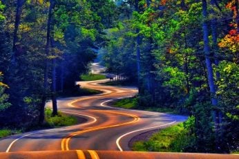 Road wallpaper, trees, forest, grass, street, nature, landscape