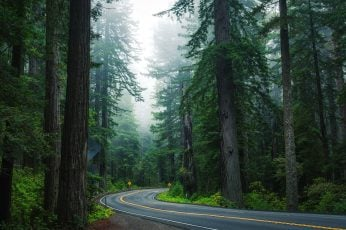 Forest road wallpaper, nature, tree, path, spruce fir forest