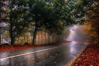 Black road wallpaper, nature, photography, landscape, wet, fall, mist, trees