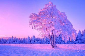 Lone tree wallpaper, winter, sky, nature, freezing, snow, purple sky