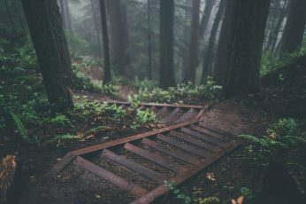 Trees wallpaper, stairs, deep forest, nature, plants, jungle