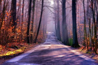 Tree trunks wallpaper, gray concrete road between brown trees, nature