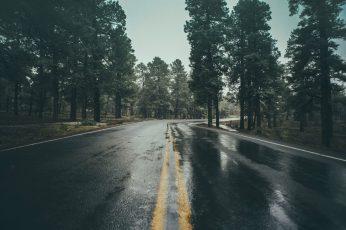 Black concrete road during daytime wallpaper, wet, rain, trees, plant