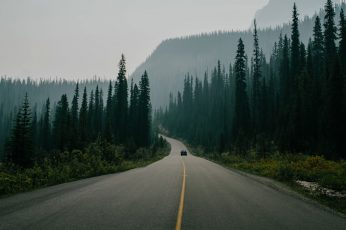 Road surrounded with trees wallpaper, nature, landscape, car, pine trees