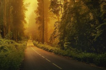 Gray concrete road wallpaper, forest, trees, green, nature, landscape, natural light