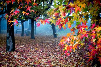 Wallpaper Beautiful Autumn Colors, Leafed Trees, Nature