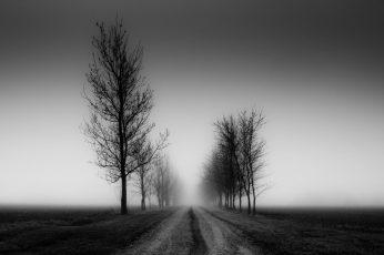 Wallpaper Beautiful Nature Black And White, Fog, Tree