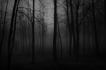 Wallpaper Black, Black And White, Forest, Nature, Foggy