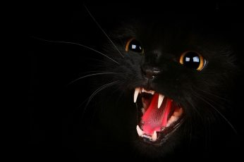 Wallpaper Black Cat, Black Cats, Animals, Open Mouth