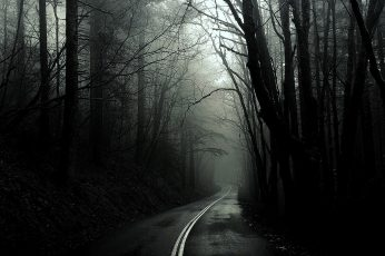 Wallpaper Black, Dark, Forest, Monochrome, Roads, Trees
