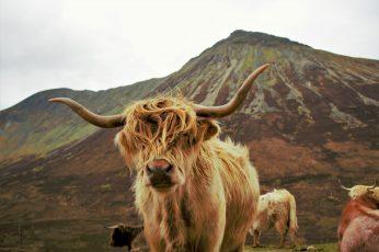 Wallpaper Brown And Black Short Coated Dog, Highland