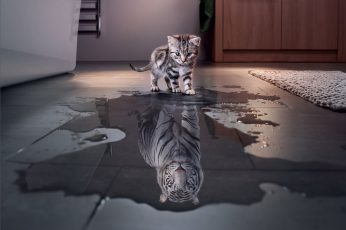 Wallpaper Cats, Cute, Funny, Kitten, Manipulation, Tiger
