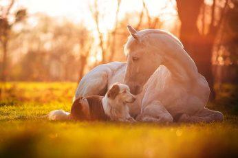 Wallpaper Cute, Horse, Dog, White Horse, Grass