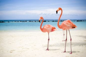 Wallpaper Flamingo Flamingos Beach Hd, Animals 1680x1050px