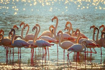 Wallpaper Flock Of Pink Flamingos On Body Of Water