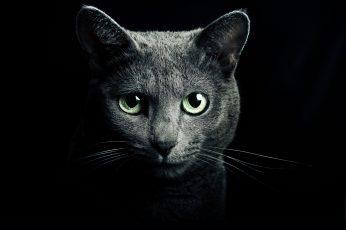 Wallpaper Gray Cat Digital Wallpaper, Black, Breed