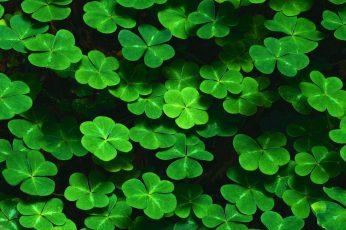Wallpaper Green Leaf Plant, Green Leaf Plant Lot Floating