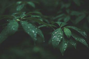 Wallpaper Green Leaf Plant, Selective Focus Photograph