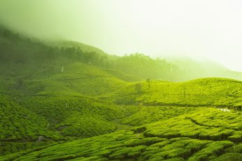 Wallpaper Kerala, India, Asia, Munnar, Tea Plantation
