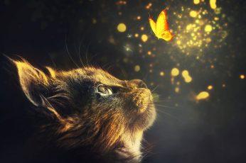 Wallpaper Manipulation, Cat, Animal, Butterflies, Glow