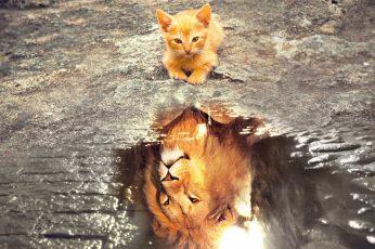 Wallpaper Nature, Animals, Cats, Kittens, Lion, Wild Cat